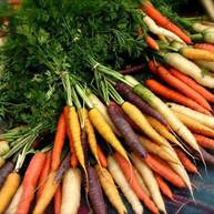 Image result for free photos carrot seeds